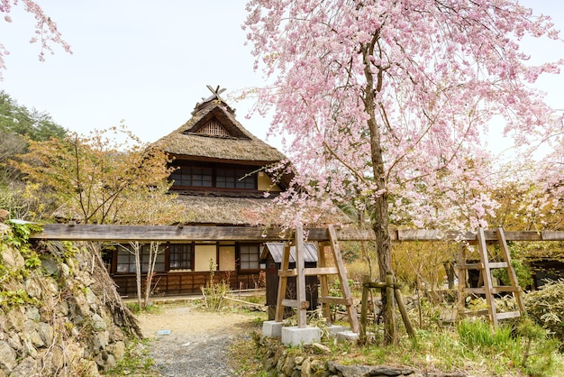 사이코, 일본, 후지카와구치코, 후지산 인근 마을, 사이코 이야시노 사토 넨바(saiko iyashi no sato nenba)에 분홍색 벚꽃이나 사쿠라 나무가 있는 초가집.