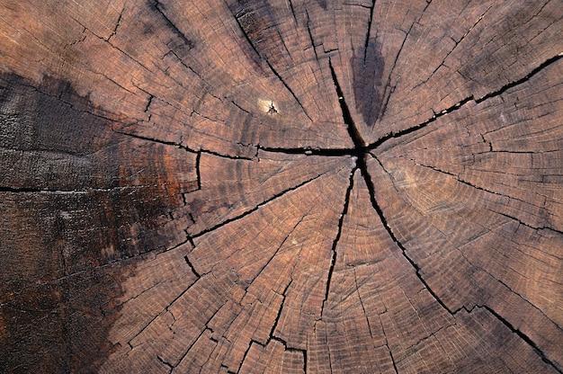 古い木の表面の抽象的な背景は雨の後に濡れています。アートワークのクローズアップのトップビュー。