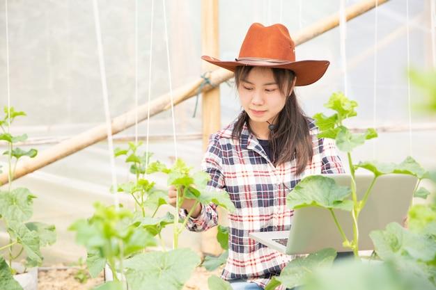 농업 경제학자는 식물 분석에서 농장, 농부 및 연구원에서 자라는 멜론 묘목을 조사합니다.
