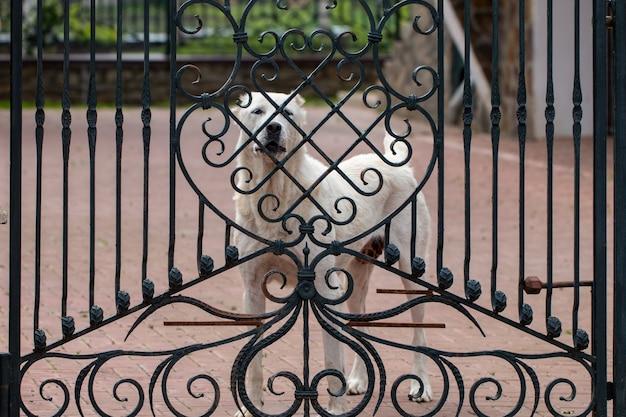 門に立っているアラバイ(中央アジアの羊飼い犬)。