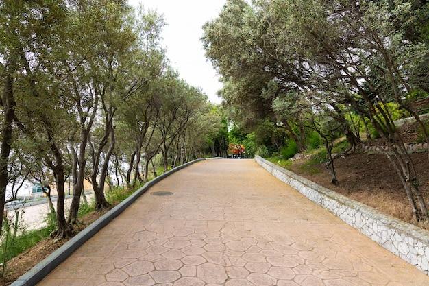 オリーブ公園の路地。アスファルト道路の両側にあるオリーブの木。