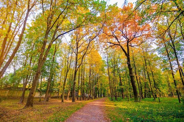 秋の公園の路地。季節は秋です。 9月、10月、11月。新しい季節。黄色の葉。美しい公園。朝の光。 。自然