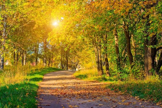 秋の公園の路地季節は秋