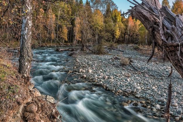 Алтайский пейзаж и река мулта, сибирь, республика алтай, россия.