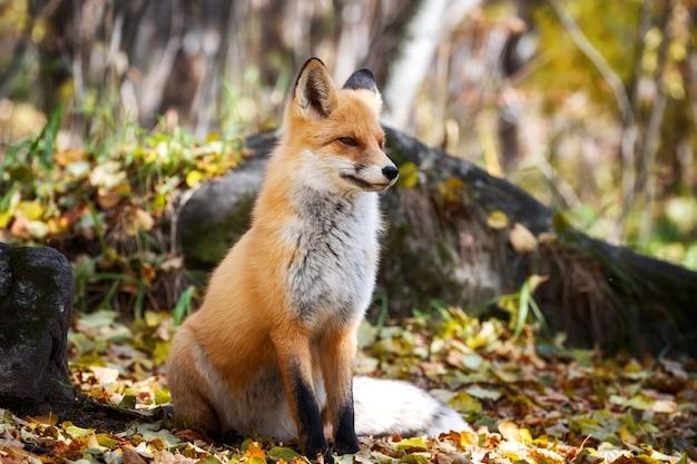 動物は野生に座って目をそらします