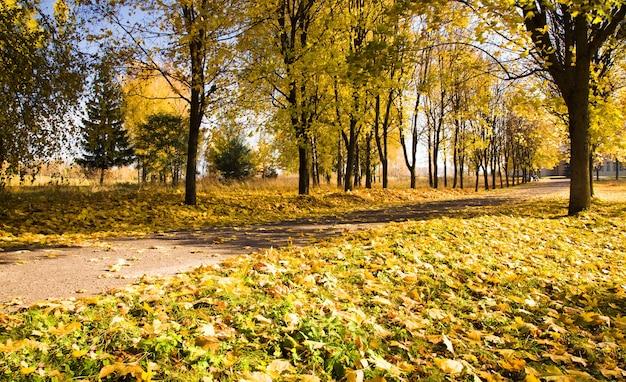 나무가 자라는 아스팔트 도로. 가을, 벨로루시