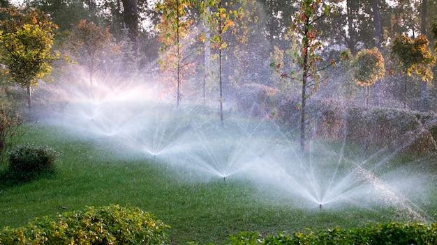 Автоматическая система полива орошает газонную траву и другие растения в парке на рассвете. солнечные лучи пробиваются сквозь ветви деревьев.