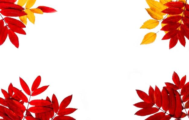白の葉で作られた秋のボーダー