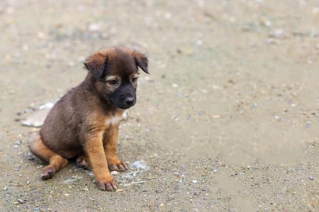 Маленький коричневый тайский щенок сидит и мило в саду