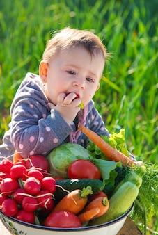 아기는 정원에서 수확 한 많은 채소를 손에 쥐고 있습니다.