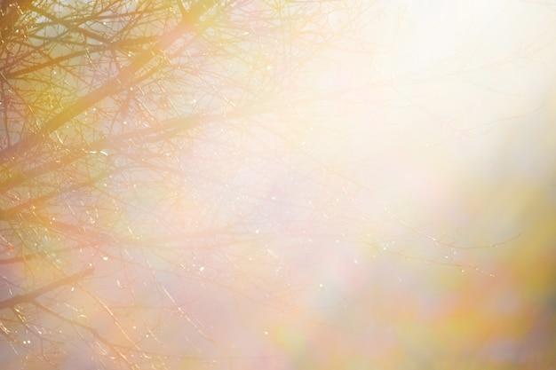 背景、木々の裏地、明るい日光に照らされた_