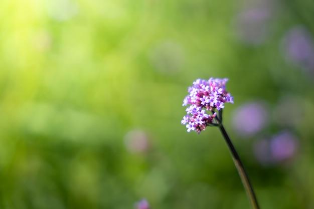 色とりどりの花、背景の自然の背景画像