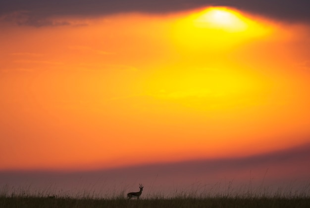 サバンナの夕日の背景