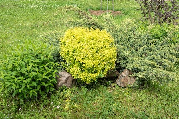 집 앞에 덤불과 식물 매자나무가 있는 뒤뜰