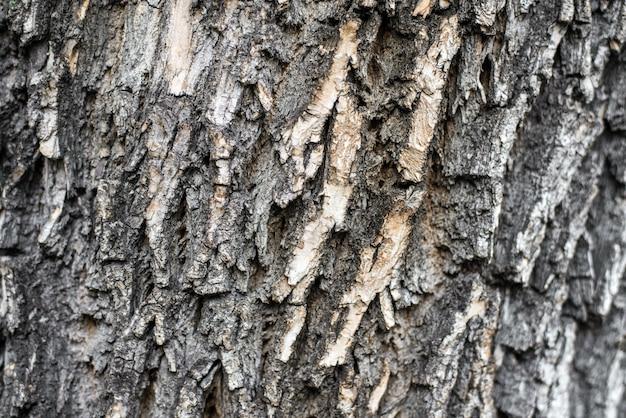 Кора дерева крупным планом