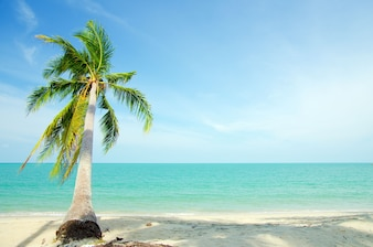 The beach with coconut palm tree