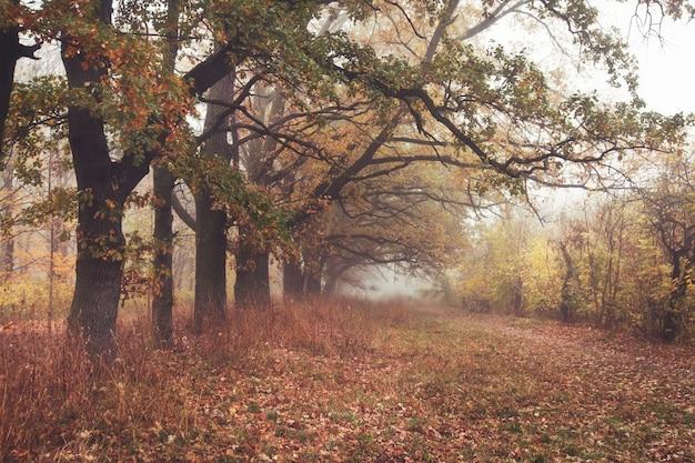 Красивая аллея в осеннем парке с множеством деревьев и желтыми листьями на полу