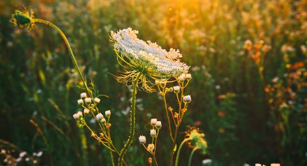 夕日の美しい野原とその前のさまざまな野花