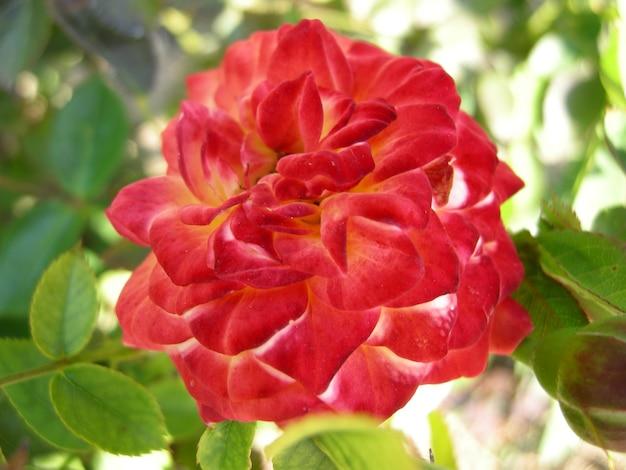 Красивые сочные разноцветные цветы для фона