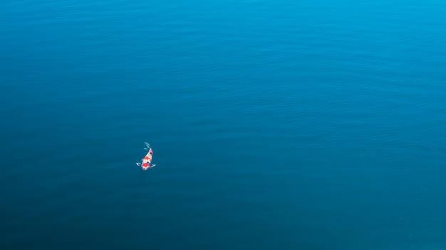 澄んだ川を泳ぐ美しい鯉。カラフルな派手な金色の鯉が青い水面に泳ぎました。カラフルな装飾魚が池に浮かんでいます。上からの眺め