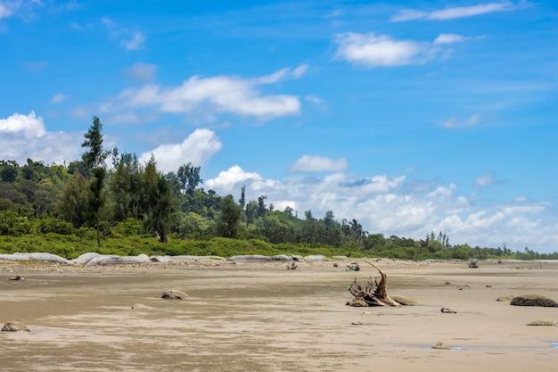 밝고 맑은 하늘 아래 숲 근처의 아름다운 모래 해변