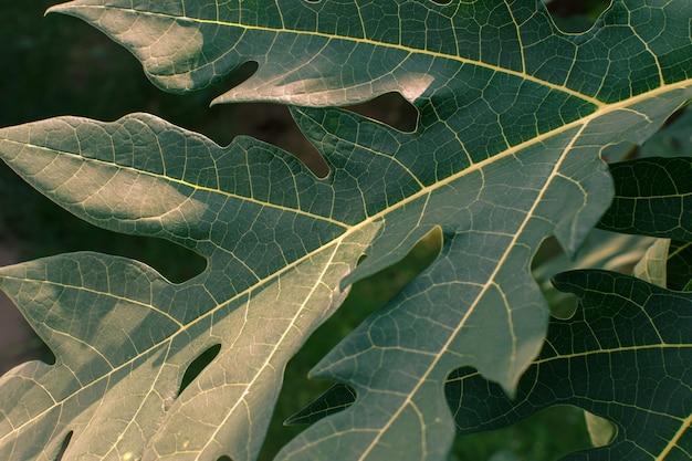 美しく模様が描かれた葉