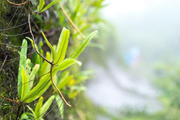 Красота зеленой природы в тропическом лесу