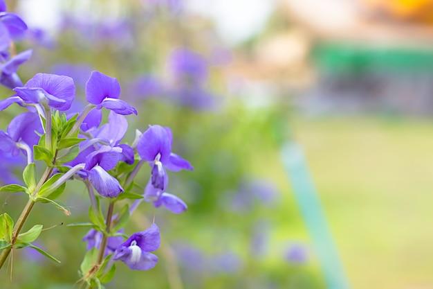 흐린 배경에 보라색 꽃의 아름다움.