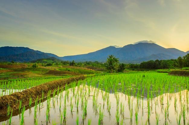 美しいインドネシアの山並みを反映した田んぼの朝の美しさ