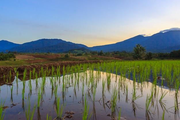 インドネシアの山脈を反映した田んぼの朝の美しさ
