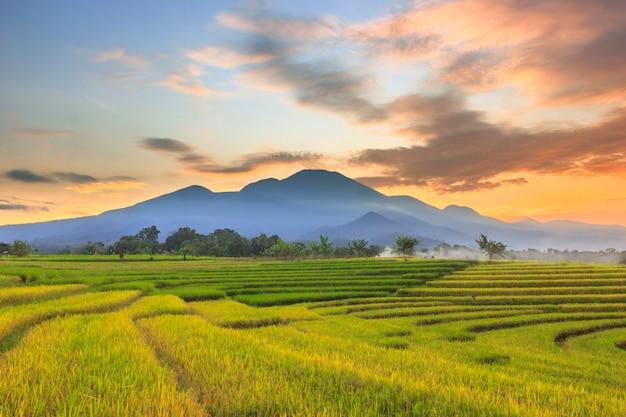 日の出の山並みの下に黄ばんだ田んぼと朝の美しい空が広がる村の朝の美しさ