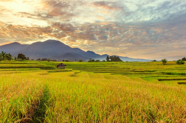 日の出の山の黄色い田んぼの朝の美しさとインドネシアの美しい朝の空