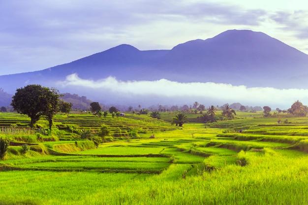 美しい田園地帯の田んぼと山々のある朝の美しさ