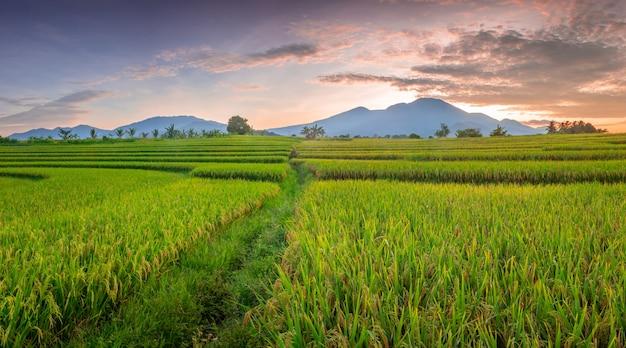 自然のパノラマの美しさ緑の田んぼと朝の空の眺め