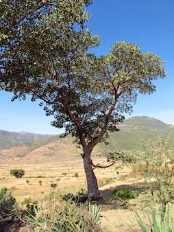 アフリカ、エチオピアのミツバチの巣箱