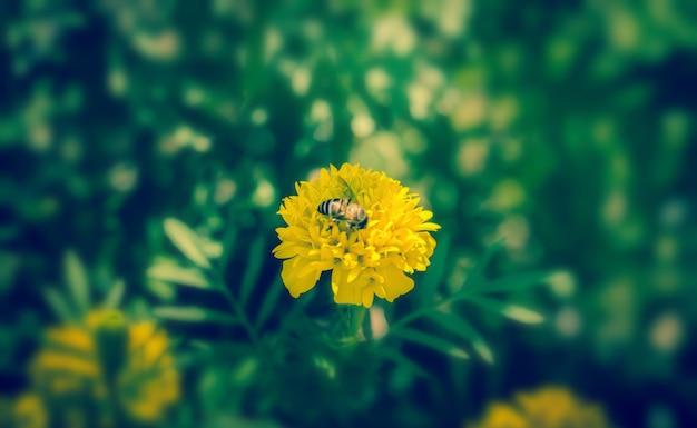 新鮮なマリーゴールドの花と蜂春の自然の壁紙の背景をリラックス