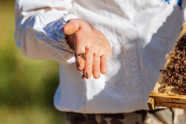 養蜂家はミツバチを蜂の巣で検査します。