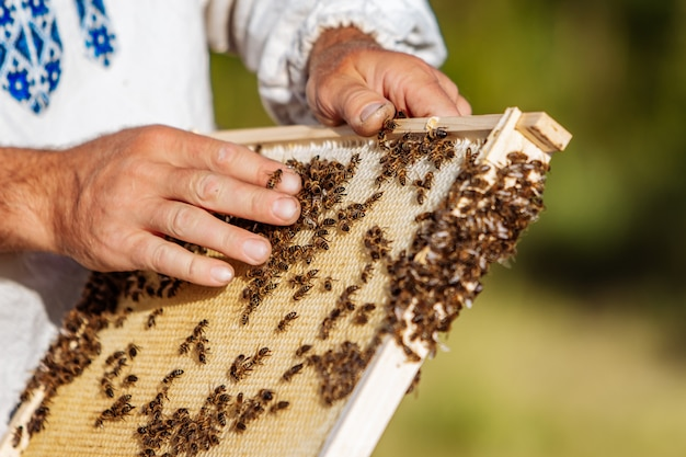 Пчеловод держит соты с пчелами.