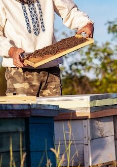 Пчеловод держит в руках соту с пчелами