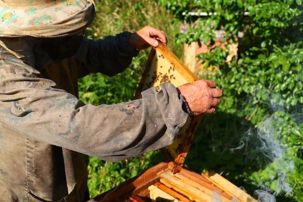 Пчеловод осматривает пчел и улей