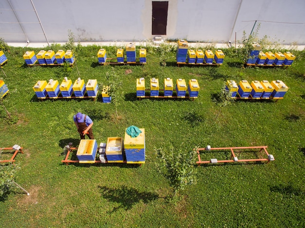 養蜂家は産業養蜂場のじんましんを検査します