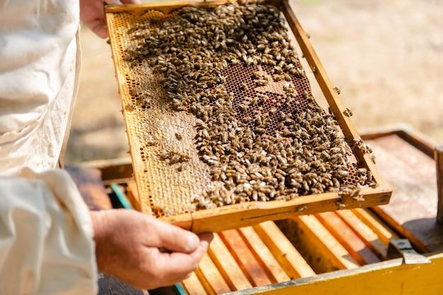 양봉가는 벌통을 열고 꿀벌은 확인하고 꿀을 확인합니다. 벌집을 탐험하는 양봉가.