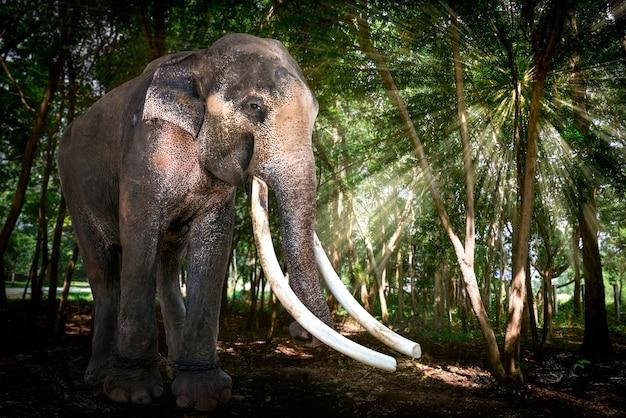 森の中のビッグブルアジアゾウ