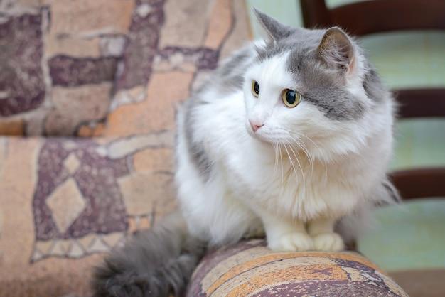 Большой серо-белый кот сидит дома на подлокотнике дивана