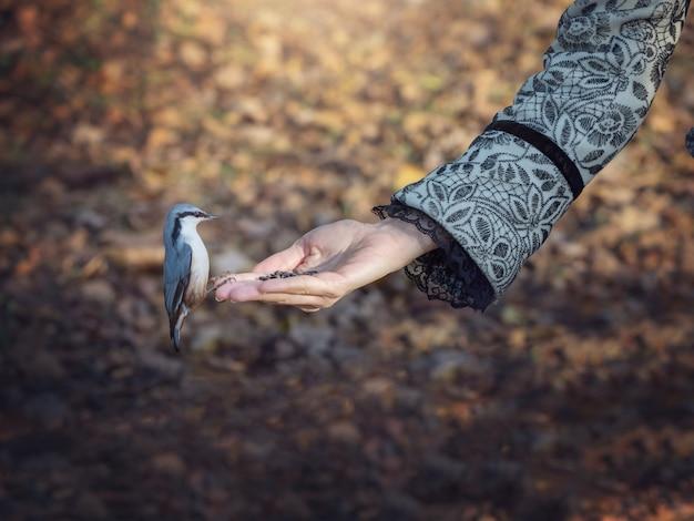 鳥は彼の手から食べ物を食べる。自然の中で鳥に餌をやる。