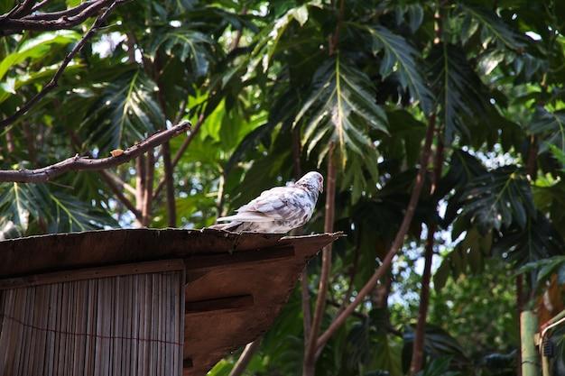 インドネシアのバリ動物園の鳥