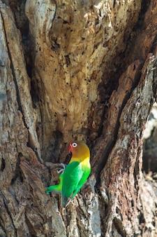 Птица выбирает гнездо в дупле, серенгети, танзания.