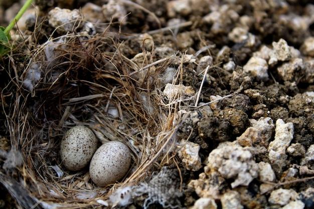 땅 둥지에 있는 새들의 알