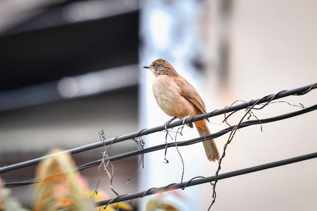 Птицы, живущие на городских проводах, активны утром.