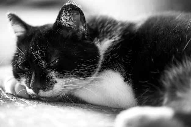 검은 고양이는 소파에 눕습니다. 검은 고양이가 동경한다